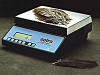 Setra Quick Counting Scales